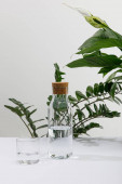 sklo a láhev sladké vody v blízkosti zelených rostlin na bílém povrchu