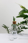 sklo a láhev sladké vody v blízkosti zelených rostlin na bílém povrchu izolované na šedé