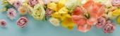 horní pohled na jarní květiny na modrém pozadí, panoramatický záběr