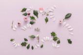 Fotografie vrchní pohled na kvetoucí jaro okvětní lístky chryzantémy a listy na fialovém pozadí