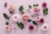 vrchní pohled na kvetoucí jaro Chryzantémy a růže s listy na fialovém pozadí