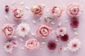 vrchní pohled na kvetoucí jaro Chryzantémy a růže s okvětními lístky na fialovém pozadí