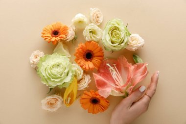 Top view of spring flowers and female hand on beige background stock vector