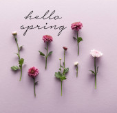 Photo flat lay with blooming spring Chrysanthemums on violet background, hello spring illustration