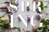 horní pohled na fialové květy na bílém pozadí, jarní ilustrace