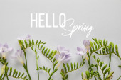 top view of violet flowers on white background, hello spring illustration