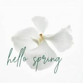 krásná orchidej květiny izolované na bílém, ahoj jarní ilustrace