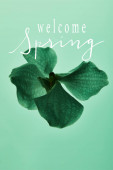 bunte grüne Orchidee Blume isoliert auf grün, willkommen Frühling Illustration
