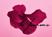 colorful pink orchid flower isolated on pink, la femme illustration