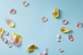 horní pohled na roztroušené květinové lístky na modrém pozadí