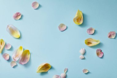 Top view of scattered floral petals on blue background stock vector