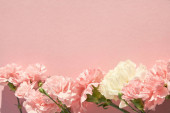 top view of blooming carnations on pink background