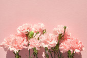 Fotografie top view of blooming carnations on pink background