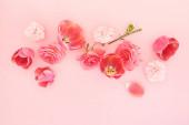 horní pohled na kvetoucí jarní květiny na růžovém pozadí