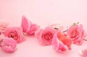 kvetoucí jarní květiny na růžovém pozadí