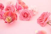 Fotografie kvetoucí jarní květiny na růžovém pozadí