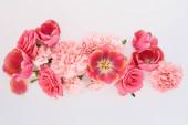 vrchní pohled na růžové jarní květiny na bílém pozadí