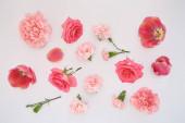 tetejére kilátás rózsaszín tavaszi virágok szórt fehér háttér