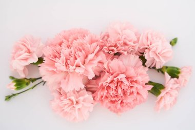 Top view of pink carnations on white background stock vector