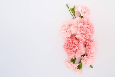 Top view of pink carnations on white background with copy space stock vector
