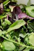 Selektivní zaměření zeleně a listů zeleného salátu