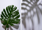 collage of fresh tropical green leaf on white background with shadow