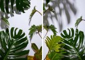collage of fresh tropical green leaves on white background with shadow