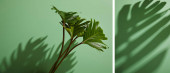 collage of fresh tropical green leaves on green background with shadow