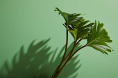 Photo fresh tropical green leaves on green background with shadow