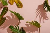frische tropische grüne Blätter auf rosa Hintergrund