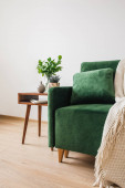 green sofa with pillow and blanket near wooden coffee table with plants