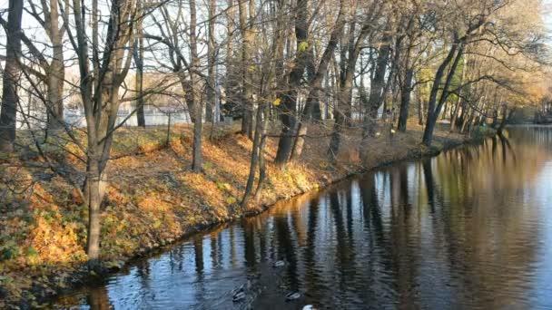 Hejno bílých Labutí plovoucí na vodní kanál na podzim Park