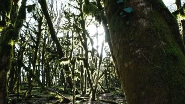 Panorama mechem lesa, slunce svítí v tajemný les, 4k