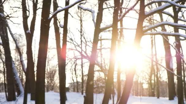 verschwommener Schneefall bei Sonnenuntergang, Schneeflocken leuchten vor dem Hintergrund des Sonnenuntergangs im Wald, Zeitlupe