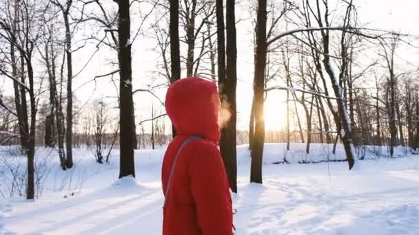 Dívka v červeném péřová bunda procházky v lese v zimě při západu slunce, pomalý pohyb