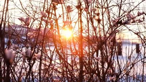 Pohyb kamery zprava doleva, západ slunce paprsky prosvítat holé větve keřů, pomalý pohyb