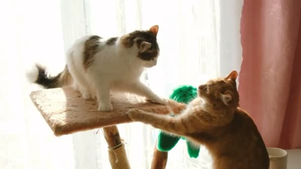 Funny cat fights at home