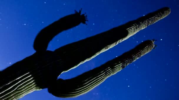 pohybující se hvězdy nad pouštní kaktus