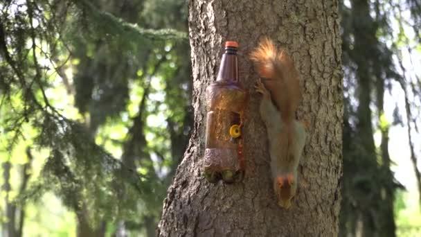 Ein flauschiges rotes Eichhörnchen frisst Futter von einem Futterhäuschen im Stadtpark. Menschliche Fürsorge für Tiere. Naturschutz. Lustige Tiere.