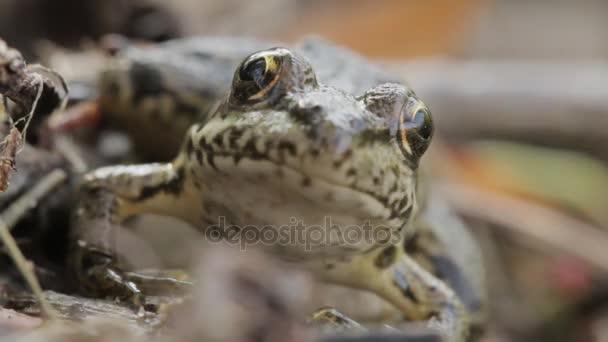 Grüner Frosch in der Natur