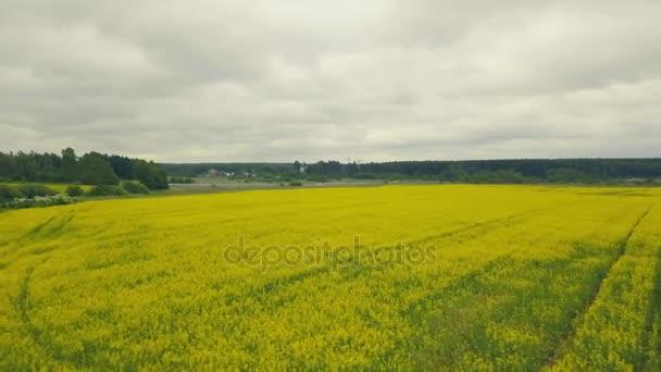 Letní žluté květy krásné pole