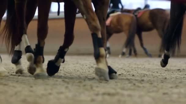Detailní pohled na kopyta koní běží přes prašné pole.