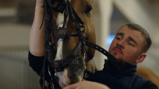 The man put on the horse the bridle. Man putting bridle on brown horse. Close up.