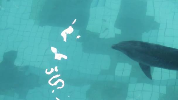 Delfín plavání v průhledné vodě plovoucí bazén v pohledu shora delfinárium