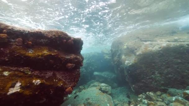 Korálové útesy ekosystém pod vodou pohled.