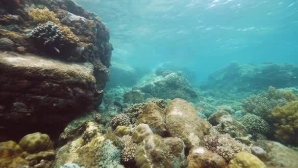 Podvodní scenérie krásného útesu s korály, obrovskými skalami a rybami.