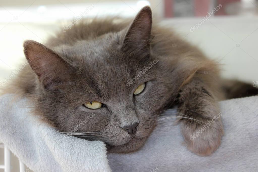 MIL ANUNCIOS.COM - Regalo gato. Compra venta de gatos ...
