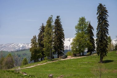 car among Alpine meadows on the background of snowy peaks