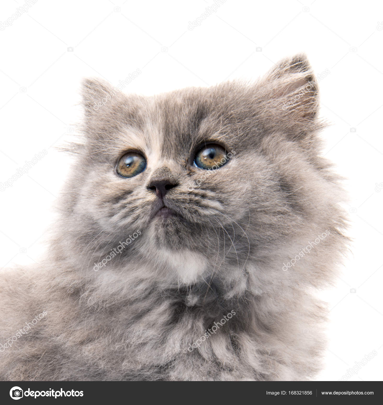 gratuit poilu chatte photos gros noir en liège putain