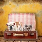 cane e gatto in valigia